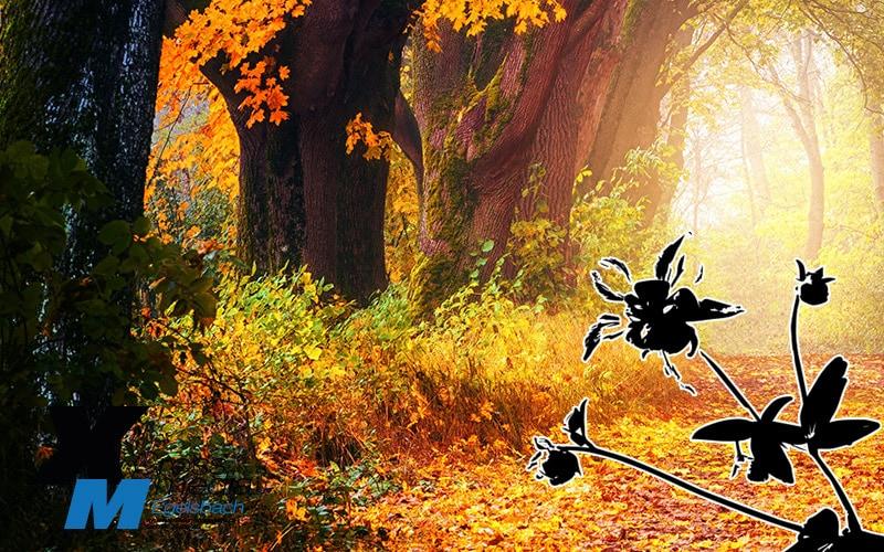Herbststimmung: Bild und Vektor gephotoshopped